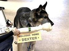 Military Working Dog Returns Home with Honor